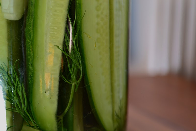 lacto-fermented-pickles